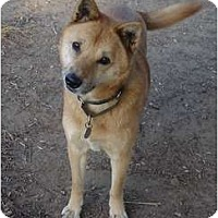 Adopt A Pet :: KamMee - Southern California, CA
