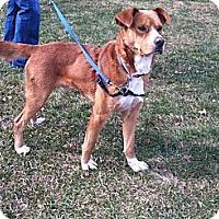 Adopt A Pet :: Griffin - Bridgewater, NJ