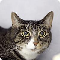 Adopt A Pet :: Tadpole - Chicago, IL
