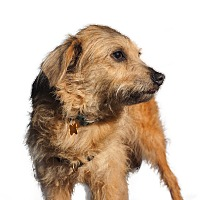 Adopt A Pet :: Holly Hunter - Austin, TX