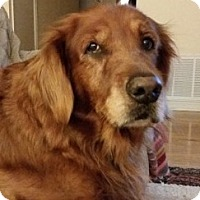 Adopt A Pet :: Maggie - New Canaan, CT