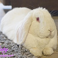 Lop-Eared Mix for adoption in Hillside, New Jersey - Misty