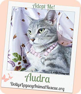 Domestic Shorthair Cat for adoption in Lincoln, Nebraska - AUDRA