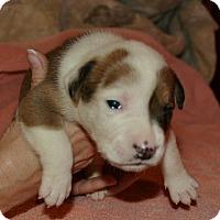 Adopt A Pet :: Cherry - West Palm Beach, FL