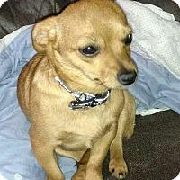 Adopt A Pet :: Gypsy - Harrisonburg, VA