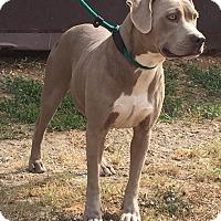 Adopt A Pet :: Paisley - Demopolis, AL