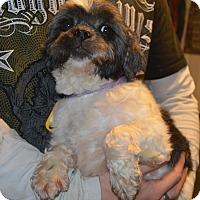 Adopt A Pet :: Patti - Prole, IA