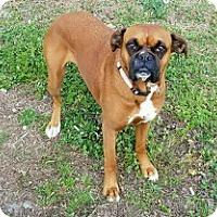 Adopt A Pet :: Hanna - Greensboro, NC