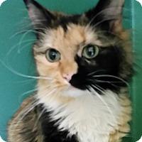 Adopt A Pet :: Reese - Franklin, NH