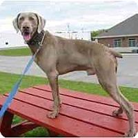 Adopt A Pet :: Czar - Attica, NY