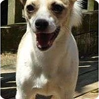 Adopt A Pet :: Bailey - Hagerstown, MD