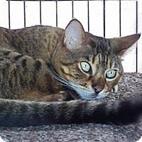 Adopt A Pet :: Nassau - Lantana, FL