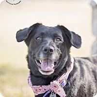 Adopt A Pet :: Tipper - Kingwood, TX