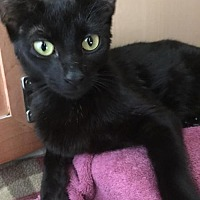 Adopt A Pet :: Haddie - Columbia, SC