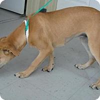 Adopt A Pet :: Sharpie - Erwin, TN
