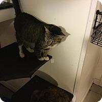 Adopt A Pet :: Delilah - Medford, NY