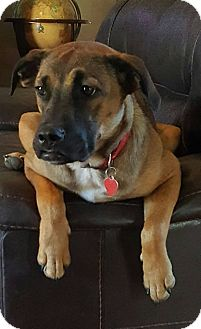 German Shepherd Dog Mix Dog for adoption in Greeneville, Tennessee - Gabby