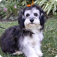 Adopt A Pet :: LAWRENCE - Newport Beach, CA