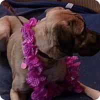 Adopt A Pet :: Maui - Yakima, WA