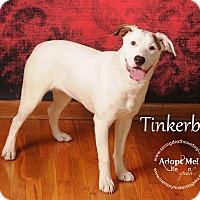 Adopt A Pet :: Tinkerbell - Topeka, KS