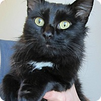 Adopt A Pet :: Pikachu - Menomonie, WI