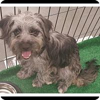 Adopt A Pet :: SADIE - Winchester, CA