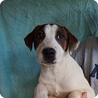 Adopt A Pet :: Alessa - Oviedo, FL