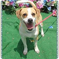 Adopt A Pet :: ARLO - Marietta, GA