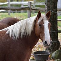 Adopt A Pet :: Sassy - Washington, CT
