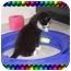 Photo 2 - Domestic Mediumhair Kitten for adoption in KANSAS, Missouri - JUNE BUG