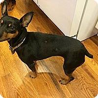Adopt A Pet :: Roxie - Malaga, NJ
