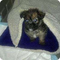 Adopt A Pet :: Hagen - Hazard, KY