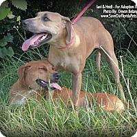 Adopt A Pet :: Heidi and Jani - Eustis, FL