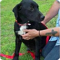Adopt A Pet :: Ryan - Wakefield, RI