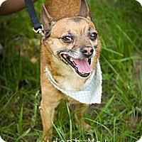 Adopt A Pet :: Tripp - Fort Valley, GA