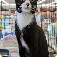 Adopt A Pet :: Luciano - Merrifield, VA