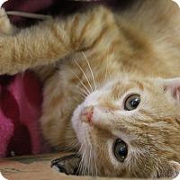 Adopt A Pet :: Buckeye - Medina, OH