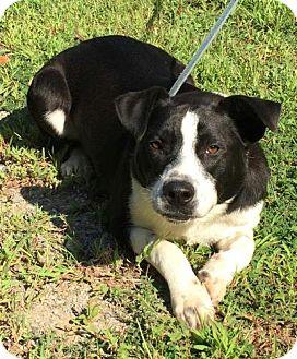 Hound (Unknown Type) Mix Dog for adoption in Washington, D.C. - Jep
