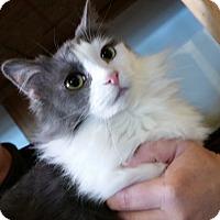 Adopt A Pet :: Cherokee - St. Louis, MO