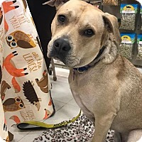 Adopt A Pet :: Earl - Lockport, NY