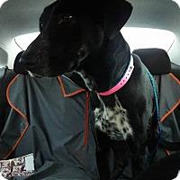 Adopt A Pet :: Sassy - Las Vegas, NV
