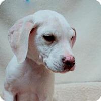Adopt A Pet :: Hayden (D17-009) - Lebanon, TN