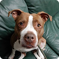 Adopt A Pet :: Robin - Long Beach, NY