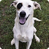 Adopt A Pet :: Brady - Huntsville, AL