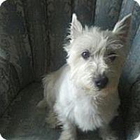 Adopt A Pet :: Weston - Ogden, UT