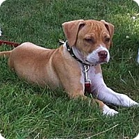 Adopt A Pet :: Diva! - Hancock, MI