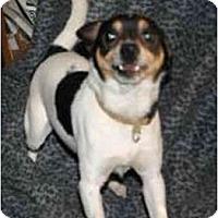 Adopt A Pet :: Prance - Carmel, IN