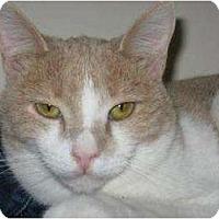 Adopt A Pet :: Twinkie - Phoenix, AZ