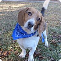 Adopt A Pet :: Beauregard - Mocksville, NC