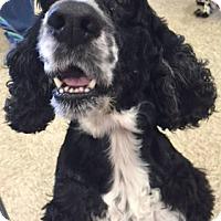Adopt A Pet :: JB - Sugarland, TX